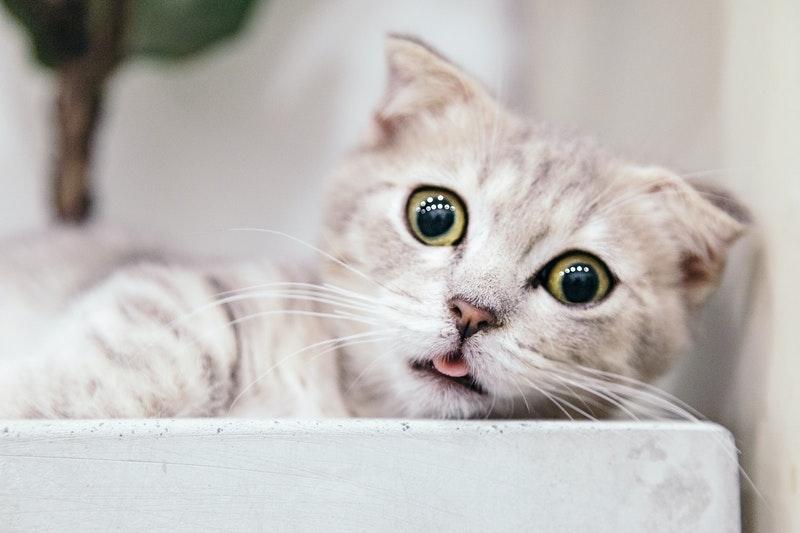 Nama Untuk Kucing 81021 Nama Untuk Kucing Comel Lucu Dan Unik